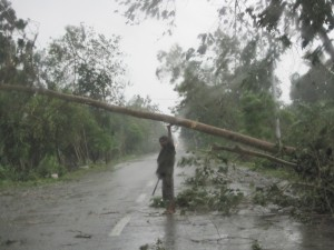 Fallen trees became obstacles to roads